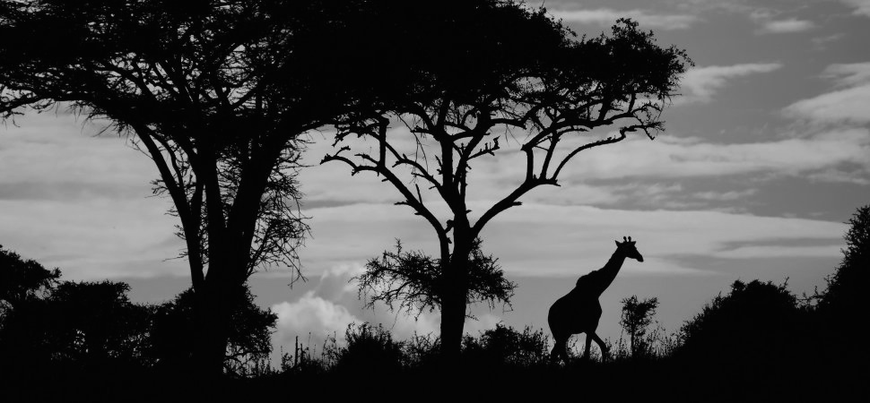 africa-kenya-landscape-1940x900_34694 2