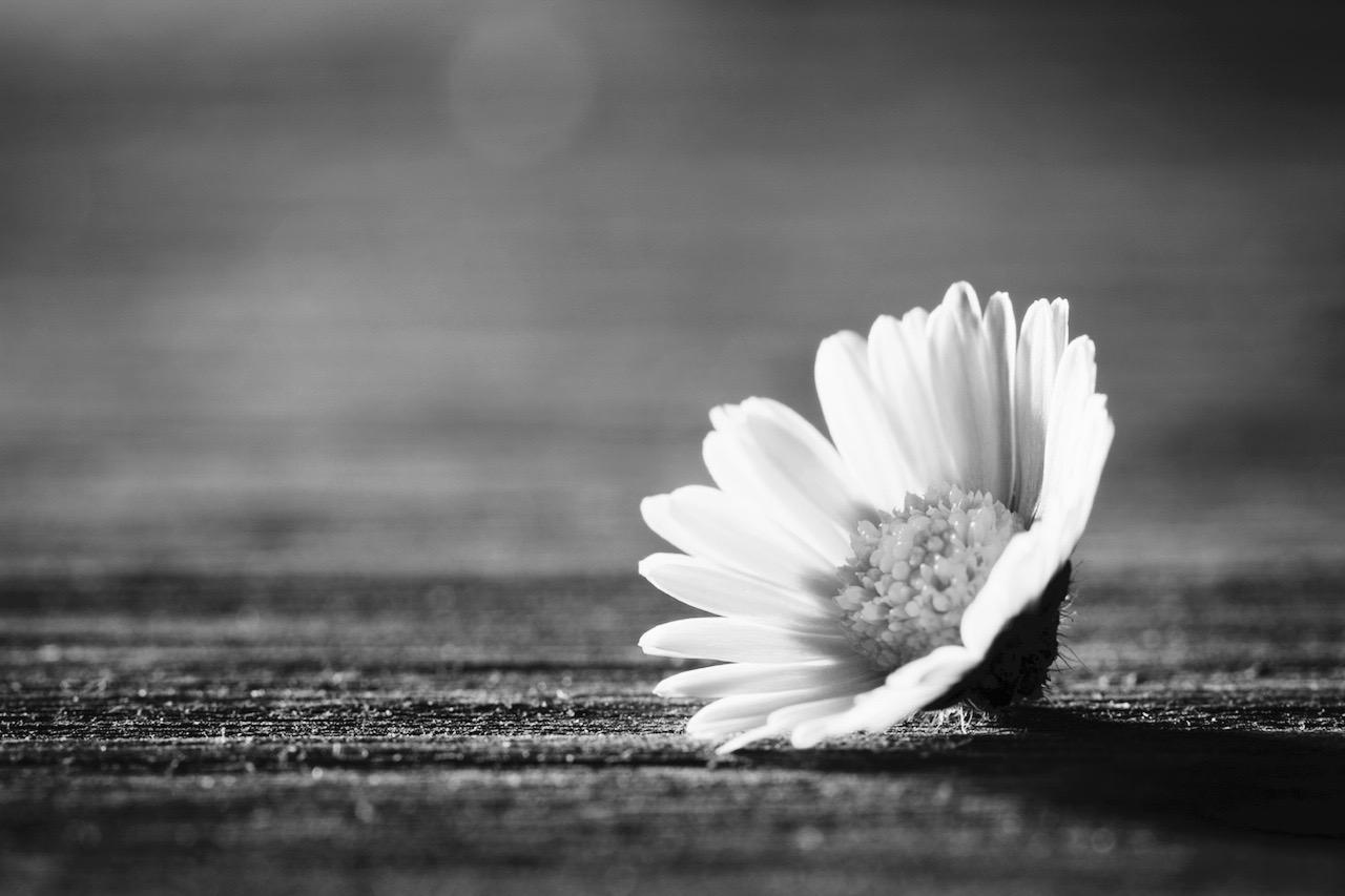 hope grief flower